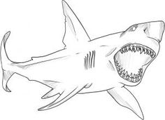 How To Draw A Great White Shark Coloring PagesHalloween