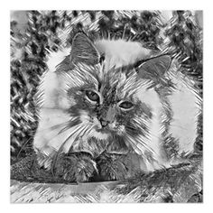 AnimalArtBW_Cat_20170907_by_JAMColors Magnetic Card - invitations custom unique diy personalize occasions