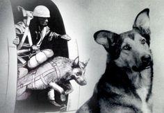 Hero Dog. Airborne of the 82nd airborne
