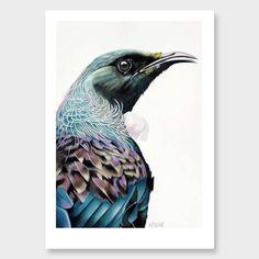 'Jefri' Tui Art Print by Margaret Petchell