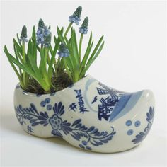 .A Delft Shoe planted with grape Hyacnths                                                                                                                                                                                 More