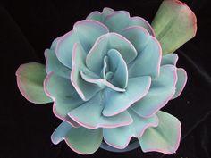 Echeveria gigantea | Flickr - Photo Sharing!