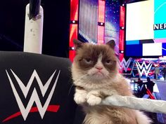 #GrumpyCat Just Hosted WWE Raw And She Was Not Impressed