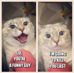 you are a funny guy, funny cats