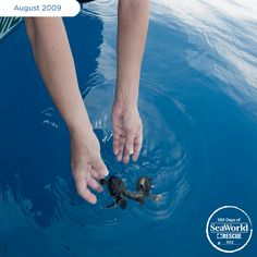 Hurricanes can be devastating for many species, especially sea turtles. These little fellas were thrown off course and marooned on a Florida beach after Hurricane Bill. Luckily, it wasn't the end for the loggerhead hatchlings and they received a second chance at life thanks to SeaWorld's animal care team. #365DaysOfRescue