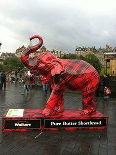 The Walkers tartan elephant!