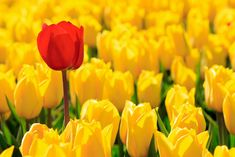 8 Qualities of Remarkable Employees Forget good to great. Here's what makes a great employee remarkable. Good To Great, Good To Know, Excel Tips, 5 Elements, Good Employee, Yellow Tulips, Employee Engagement, Job Search, Thoughts