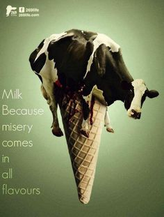 ditch milk because misery comes in all flavours; why #vegan