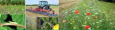 THM - Tecnologías de la Horticultura Mediterránea: Vibraciones sonoras para controlar plagas