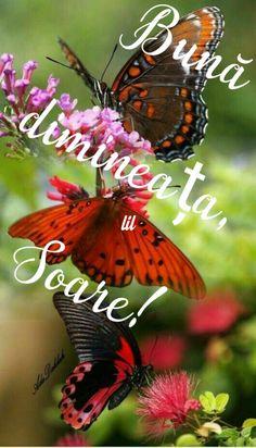 Good Morning, Bee, Animals, Buen Dia, Honey Bees, Animales, Bonjour, Animaux, Bees