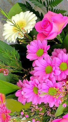 A lovely deep pink. Exotic Flowers, Amazing Flowers, Beautiful Roses, Fresh Flowers, Pretty Flowers, Colorful Flowers, Beautiful Gardens, Pink Flowers, Good Morning Flowers