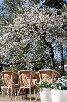 körsbärsträd korgstol min altan