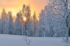 Delightful winter light by aplog1