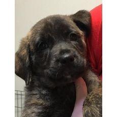 36 Best Rottweiler Urgent Save Life Images On Pinterest Pets Save