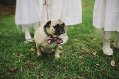 gotta love a pug in a bow tie! photo by Jonas Seaman | Bridal Musings http://bridalmusings.com/2013/09/southern-wedding-jonas-seaman-photography/