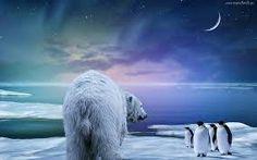 Znalezione obrazy dla zapytania niedźwiedź polarny