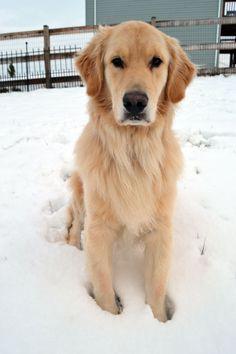 My handsome boy, Cooper.