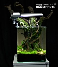 """Nano Cube at """"the Art of the planted Aquarium"""" 2013 in Hannover, Germany"""