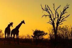 Sunrise by Arno & Louise Wildlife, via Flickr