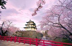 Cherry blossoms Hirosaki castle, Japan.