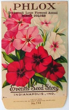 EVERITT'S SEED STORE,  Phlox 783, Vintage Seed Packet