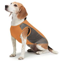 Insect Shield Mesh Tank Top for Dogs * Check this awesome product by going to the link at the image. (This is an affiliate link and I receive a commission for the sales)