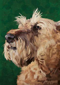 Mabel the Irish terrier