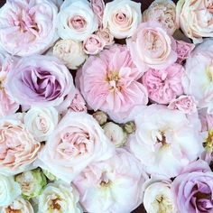 """princesse-pastel-rose:  """"Have a lovely day  #flowers  """""""
