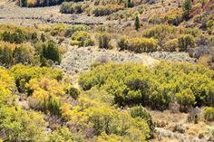 Deciduous Forest Colorado | autumn colored deciduous forest BLM public land E. Salt Creek, CO, USA ...