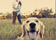 :) love this, i've got a wedding coming up with a dog, this is perfect.