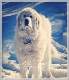 It's a Dogs Life ~ Excuse the Drool. The story of a family dog. Love, laughter & tears  http://www.lynneknowlton.com/a-dogs-life/