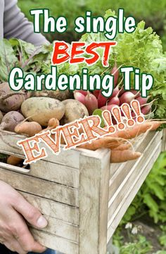 The Single BEST Gardening Tip EVER!!!  See what you can do to make your garden low maintenance year after year!  #gardentips #gardenadvice #covercrop #notill #vegetablegarden #lowmaintenance #annualrye #oldworldgardenfarms