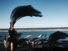 Palme im Wind in El Gouna