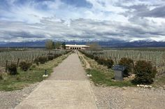 Private Lujan Wine Tour with Gourmet Wine-Paired Lunch from Mendoza Discover Lujan de Cuyo's finest wineries nestled in the heart of Mendoza's wine country. During four winery visits, see the vineyards and cellars, learn about the winemaking process and enjoy wine tastings at each location. This 8-hour tour includes gourmet wine-paired lunch, all tasting fees and private transport with your personal driver-guide.Your personal driver-guide will meet you at your hotel at 9am and...