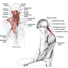 Common Neck & Shoulder Stretching Exercises http://www.kallmeyer-naturheilpraxis.de?utm_content=buffer236d6&utm_medium=social&utm_source=pinterest.com&utm_campaign=buffer