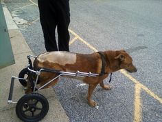 When Simon needed surgery for a ruptured disc and a mobility cart to keep him on his paws, Petplan was there, covering the operation, care and even his new set of wheels