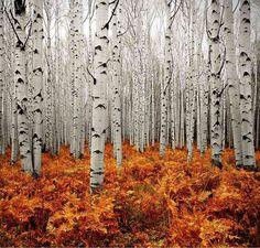 Prachtige herfstfoto!! Hoornse Bos?