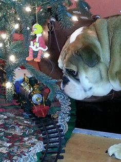 Interesting dog fact of the week: Americans spend about $5 billion annually on holiday gifts for pets.
