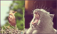 А поговорить   Фотомарьяж - 30 Дней Фотоприключений Bird, Animals, Animales, Animaux, Birds, Animal, Animais