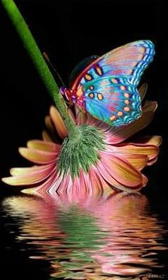 "Vlinders (Dutch for ""Butterflies"") nature Beautiful Creatures, Animals Beautiful, Cute Animals, Butterfly Kisses, Butterfly Flowers, Rainbow Butterfly, Butterfly Photos, Butterfly Painting, Flowers Garden"