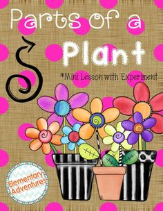 Help your students learn to identify the Parts of a Plant with this engaging Mini-Lesson which includes a hands-on experiment and foldables. During this lesson students will create 2 foldables, complete an experiment, and an experiment documentation sheet. You, the teacher, are provided with a Teacher Guide, Materials List, Experiment Guide, and Parts of a Plant Definition Sheet.