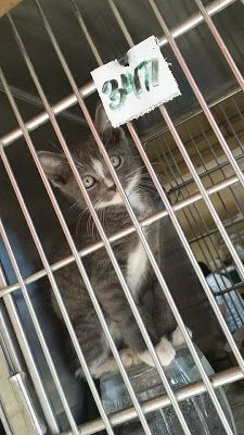 A Downey Cat Blog: Downey CA: PLEASE HELP FRANKIE! ADORABLE 2-3 MONTH... Good News, Adoption, Homes, Cats, Blog, Foster Care Adoption, Houses, Gatos, Kitty Cats
