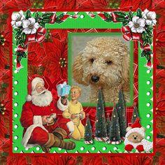 Nous vous souhaitons de passer un bon Noël les amis(es).  bisous et Léchouillettes.    Michelle et sa petite Flora.     www220.litado.edu.vn
