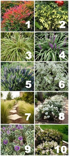 If you're part of the California drought, this has a GREAT list of drought tolerant plants. List of plants used in California drought tolerant yard :: OrganizingMadeFun.com