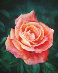 watercolor rose (40x50cm)