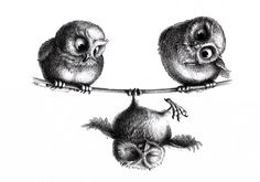 Drei Eulen Hochseilakt - Three Owls Tightrope Walk - Copyright by Stefan Kahlhammer
