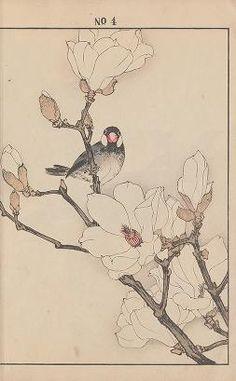Botanical Drawings, Botanical Art, Bird Illustration, Botanical Illustration, Japanese Prints, Japanese Art, Bird Painting Acrylic, China Art, Japanese Painting