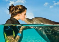 Enjoy an up close and joyful experience with Atlantic bottlenose dolphins at Dolphin Cay in Atlantis, Paradise Island