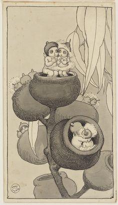 Book Illustrations - May Gibbs