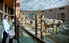 Elephant House, zoológico de Copenhague   Foster + Partners
